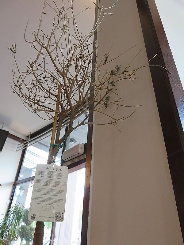 "Photo of Leaf Vegetarian  by <a href=""/members/profile/TrudiBruges"">TrudiBruges</a> <br/>sad sight: dead plants Leaf Rotterdam <br/> November 19, 2017  - <a href='/contact/abuse/image/38512/326951'>Report</a>"