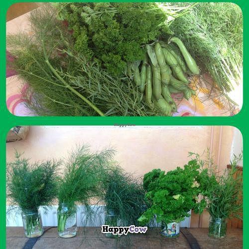 "Photo of Bij de Jongens op 't Zand  by <a href=""/members/profile/DirkjanJansen"">DirkjanJansen</a> <br/>fresh herbs from the garden <br/> July 21, 2013  - <a href='/contact/abuse/image/39282/51698'>Report</a>"