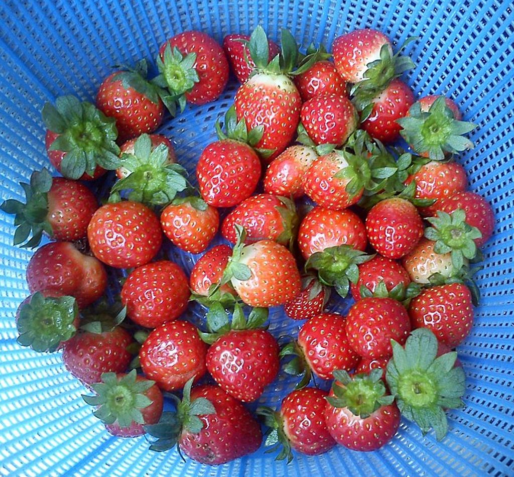 """Photo of Mapopo Community Farm and Market Fanling  by <a href=""""/members/profile/ouikouik"""">ouikouik</a> <br/>mapopo <br/> October 9, 2015  - <a href='/contact/abuse/image/39953/120746'>Report</a>"""