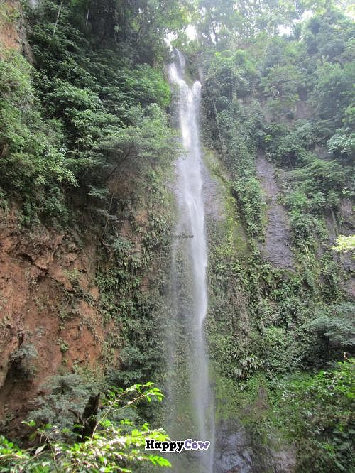 """Photo of CLOSED: Vista Del Valle Plantation Inn  by <a href=""""/members/profile/Alan16"""">Alan16</a> <br/>This is the waterfall that they have on their grounds.  It was a pleasant hike, with some climbing up and down ladders <br/> November 30, 2013  - <a href='/contact/abuse/image/40160/59454'>Report</a>"""