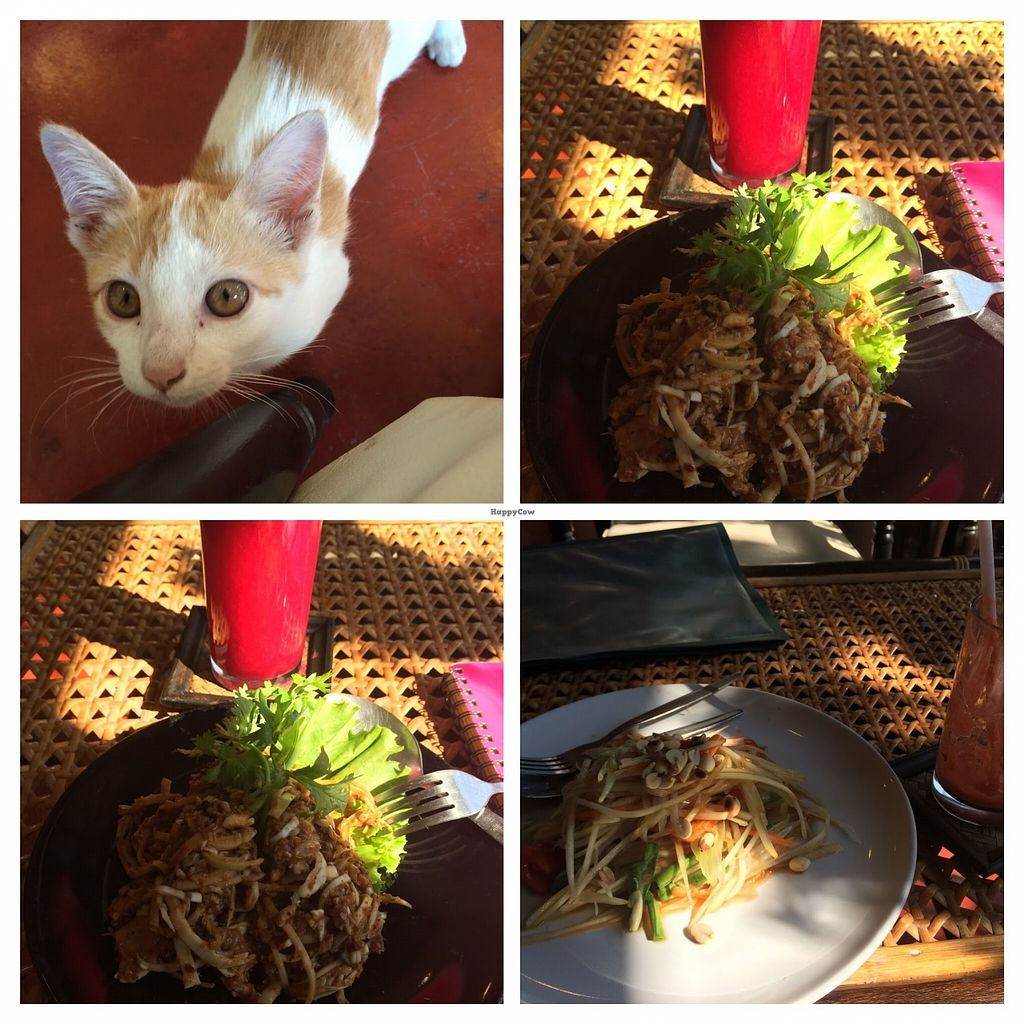 """Photo of Fuang Vegetarian  by <a href=""""/members/profile/KerstinSHaring"""">KerstinSHaring</a> <br/>Papaya Salad, banana flower, orange beetroot juice and a little guest <br/> February 2, 2016  - <a href='/contact/abuse/image/40611/134652'>Report</a>"""