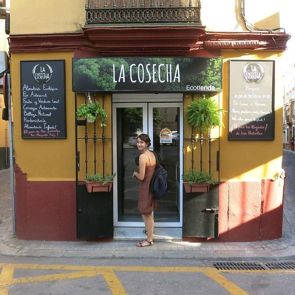 """Photo of La Cosecha, tienda Ecologica  by <a href=""""/members/profile/community"""">community</a> <br/>La Cosecha, Ecotienda <br/> November 26, 2016  - <a href='/contact/abuse/image/4096/194814'>Report</a>"""