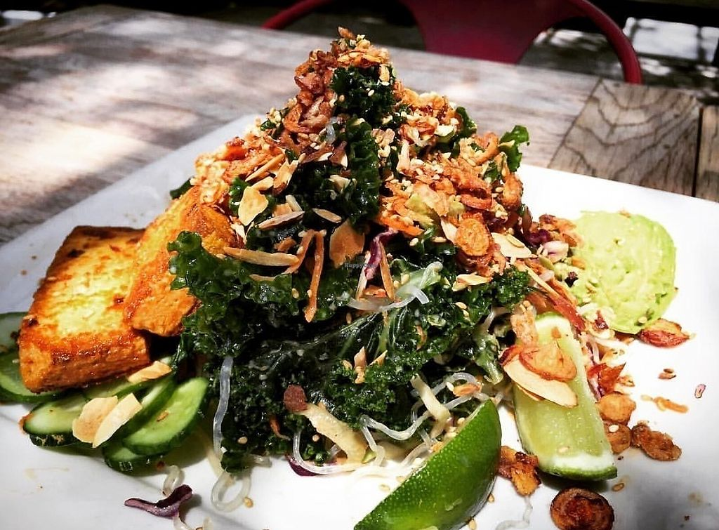 "Photo of Sage Vegan Bistro and KindKreme  by <a href=""/members/profile/catalinacarbajal"">catalinacarbajal</a> <br/>Asian kelp noodle salad <br/> June 22, 2017  - <a href='/contact/abuse/image/41615/272372'>Report</a>"