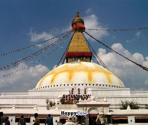 "Photo of Happiness Vegetarian  by <a href=""/members/profile/Kiko"">Kiko</a> <br/>Boudhanath Stupa <br/> November 7, 2013  - <a href='/contact/abuse/image/43061/58131'>Report</a>"