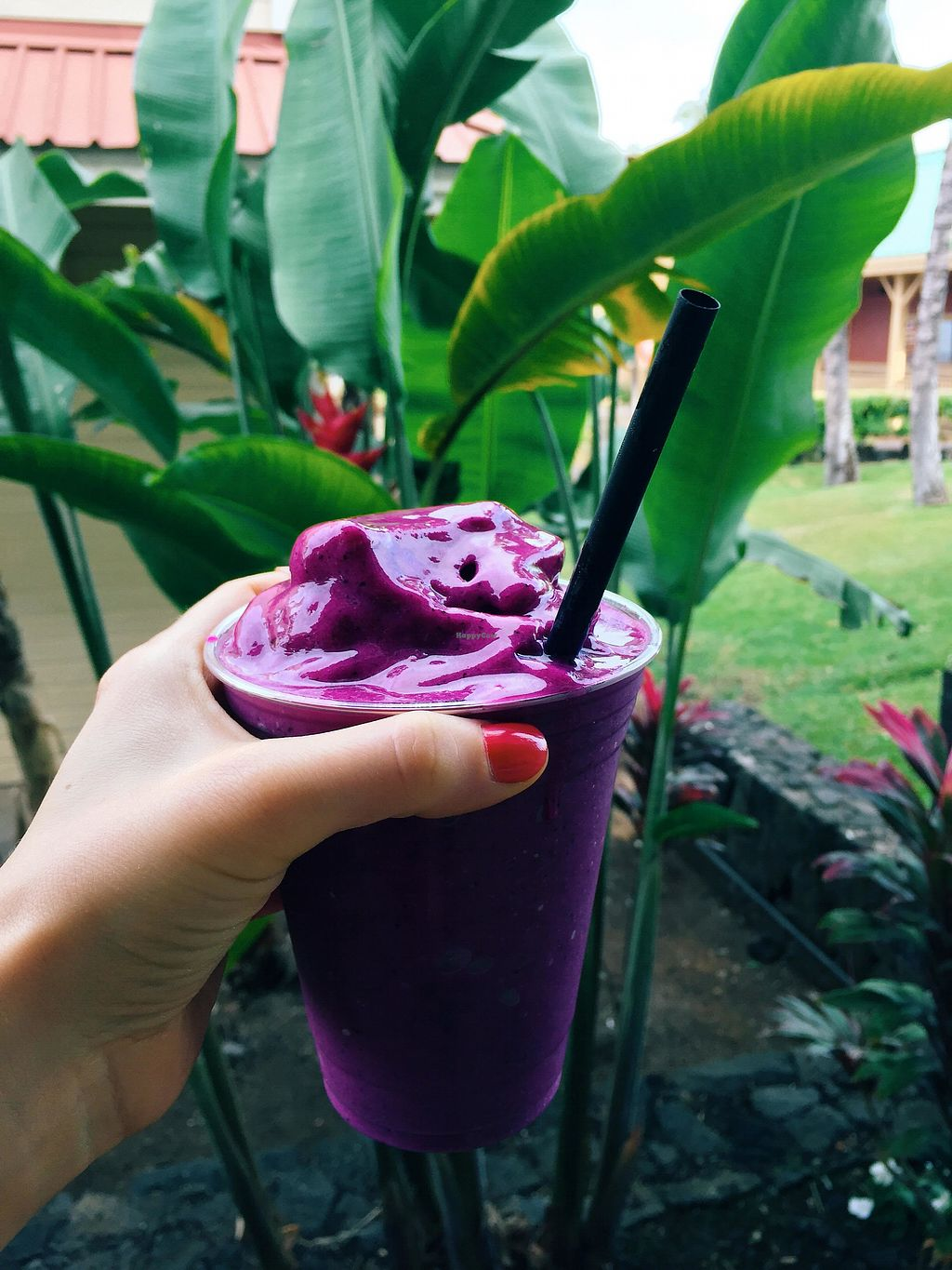 """Photo of Evolution Bakery and Cafe  by <a href=""""/members/profile/Stephaneen"""">Stephaneen</a> <br/>Dragonfruit Smoothie <br/> March 21, 2018  - <a href='/contact/abuse/image/43352/373527'>Report</a>"""