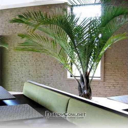 """Photo of CLOSED: Green Zebra  by <a href=""""/members/profile/happycowgirl"""">happycowgirl</a> <br/>inside - small, tables close together <br/> November 30, 2008  - <a href='/contact/abuse/image/4348/1287'>Report</a>"""