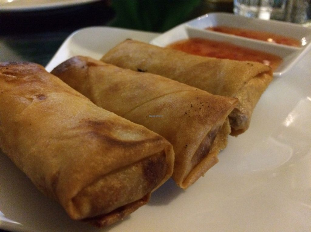 """Photo of The Corn  by <a href=""""/members/profile/Siup"""">Siup</a> <br/>fried spring rolls  <br/> December 22, 2015  - <a href='/contact/abuse/image/43847/129482'>Report</a>"""