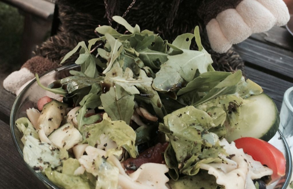 """Photo of Laibon  by <a href=""""/members/profile/annabazoo"""">annabazoo</a> <br/>Possum Jackson enjoying a pasta salad <br/> December 16, 2015  - <a href='/contact/abuse/image/4420/236235'>Report</a>"""