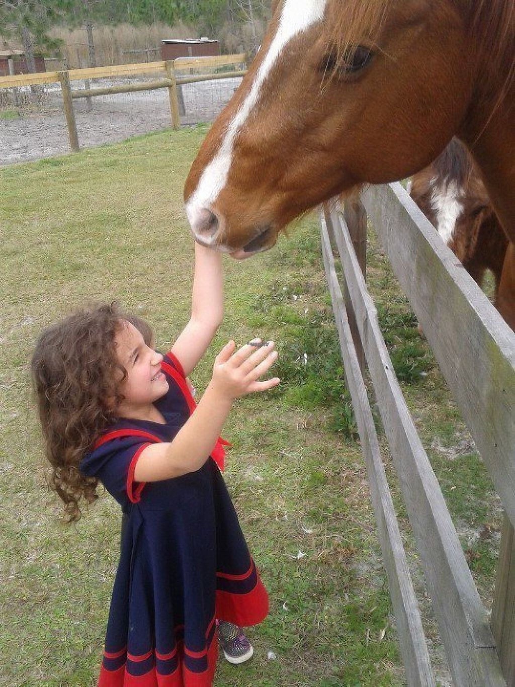 """Photo of CJ Acres Animal Rescue Farm  by <a href=""""/members/profile/EdwardElliott"""">EdwardElliott</a> <br/>Tours are very animal interactive! <br/> November 16, 2016  - <a href='/contact/abuse/image/44536/191017'>Report</a>"""