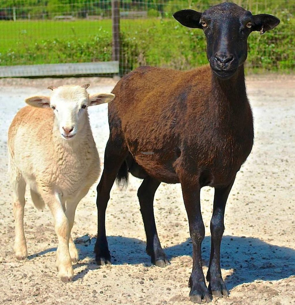 """Photo of CJ Acres Animal Rescue Farm  by <a href=""""/members/profile/EdwardElliott"""">EdwardElliott</a> <br/>Mom and her baby are now safe at the sanctuary! <br/> November 16, 2016  - <a href='/contact/abuse/image/44536/191024'>Report</a>"""