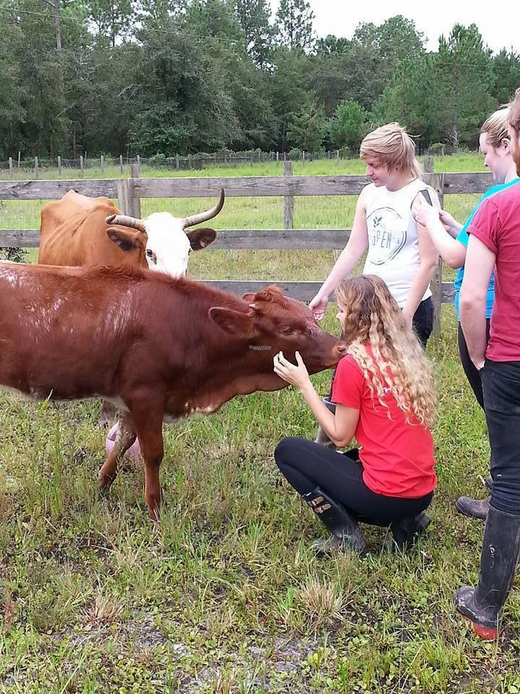 """Photo of CJ Acres Animal Rescue Farm  by <a href=""""/members/profile/EdwardElliott"""">EdwardElliott</a> <br/>Attending an """"Animal Caregiving"""" volunteer session is incredible. Check out opportunities at cjacres.org <br/> November 16, 2016  - <a href='/contact/abuse/image/44536/191025'>Report</a>"""