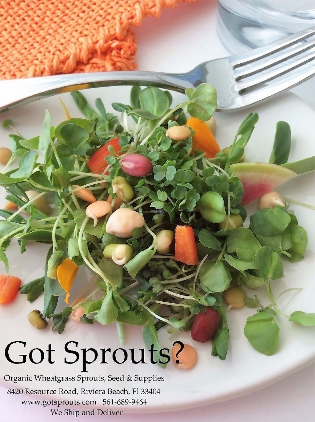 """Photo of Got Sprouts  by <a href=""""/members/profile/hellogotsprouts"""">hellogotsprouts</a> <br/>Find incredible fresh, delicious, organic sprouts here <br/> January 26, 2017  - <a href='/contact/abuse/image/45032/217204'>Report</a>"""
