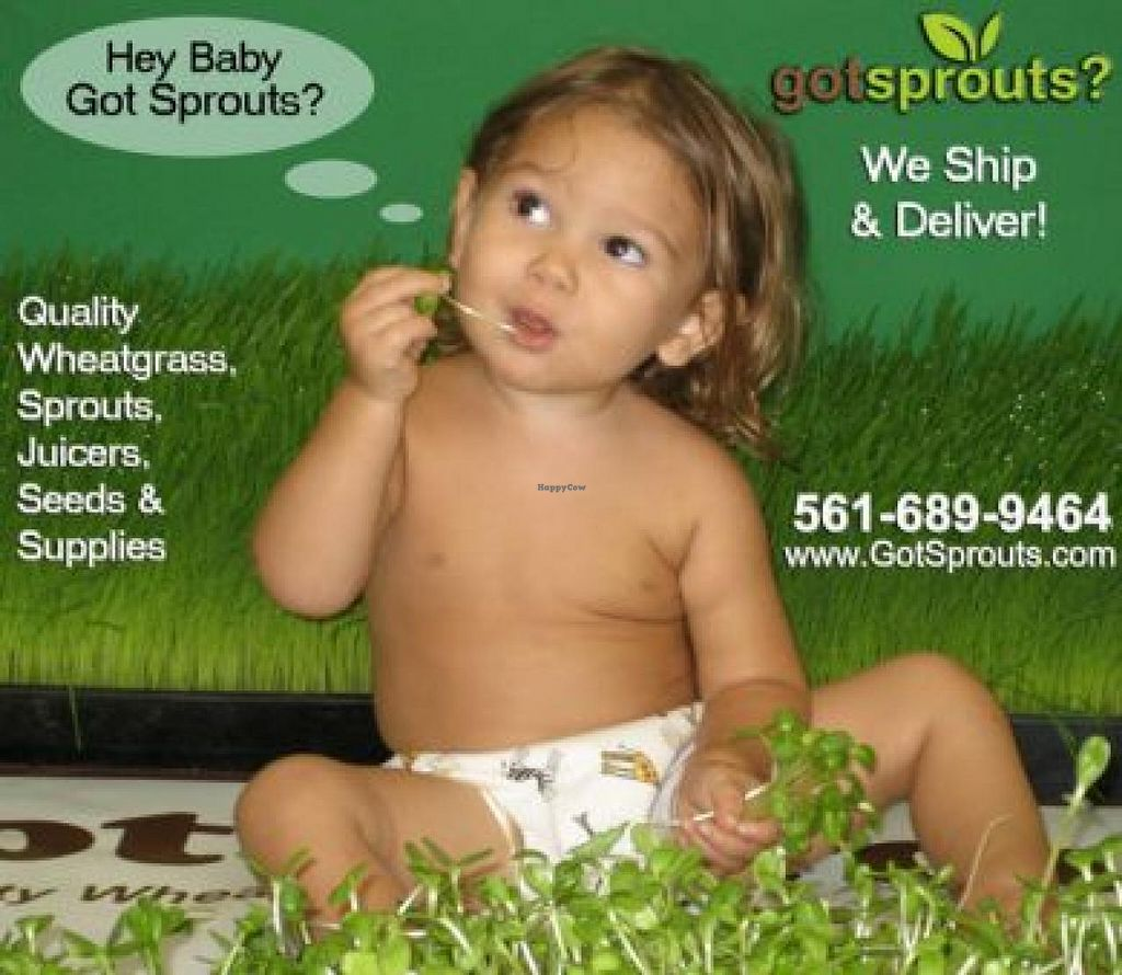 """Photo of Got Sprouts  by <a href=""""/members/profile/community"""">community</a> <br/>Got Sprouts <br/> February 1, 2014  - <a href='/contact/abuse/image/45032/63529'>Report</a>"""