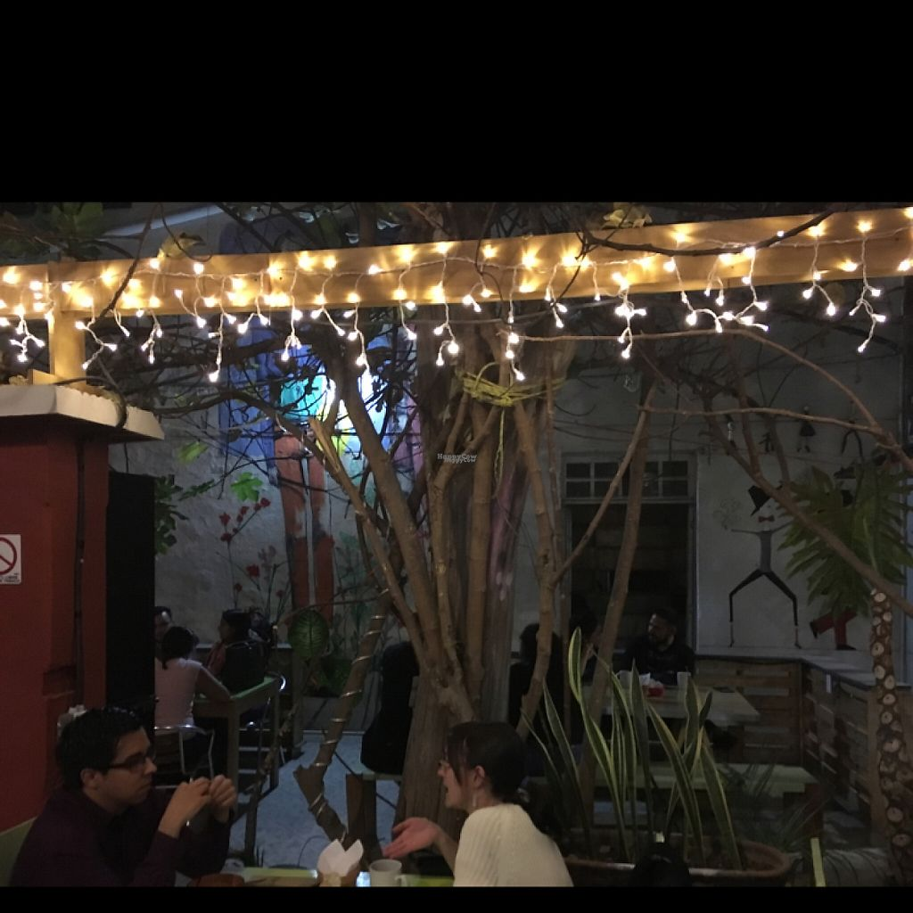 """Photo of Maco Cafe  by <a href=""""/members/profile/AnaVEGANA"""">AnaVEGANA</a> <br/>open garden <br/> January 28, 2017  - <a href='/contact/abuse/image/45167/218083'>Report</a>"""