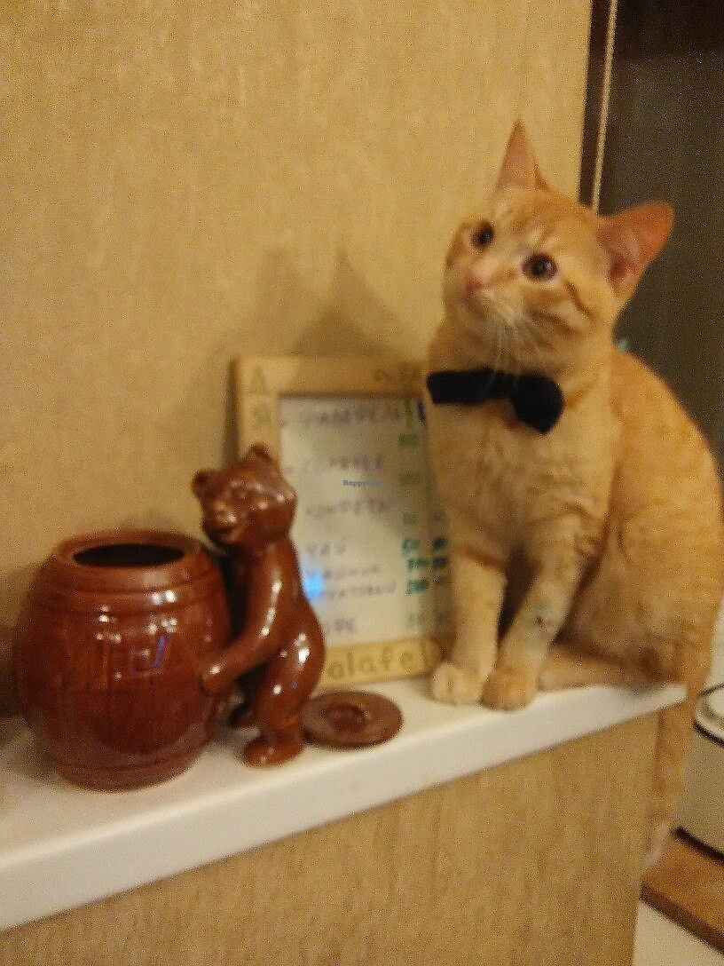 """Photo of Dyadya Fadi  by <a href=""""/members/profile/Katyata"""">Katyata</a> <br/>This is the famous cat Shmidt! <br/> August 22, 2017  - <a href='/contact/abuse/image/45184/295532'>Report</a>"""