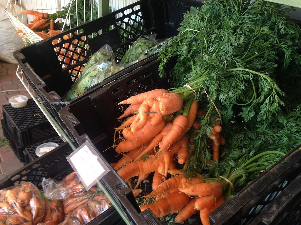 """Photo of Bio Markt  by <a href=""""/members/profile/TheModernHerbivore"""">TheModernHerbivore</a> <br/>farm fresh carrots <br/> August 10, 2017  - <a href='/contact/abuse/image/46191/291215'>Report</a>"""