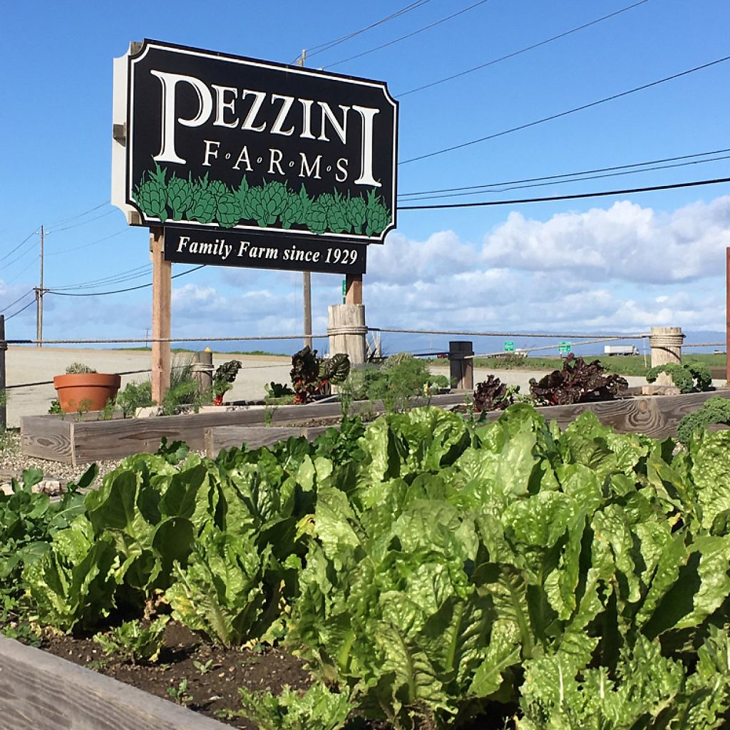 "Photo of Pezzini Farms  by <a href=""/members/profile/KWdaddio"">KWdaddio</a> <br/>Pezzini Farms entrance sign <br/> December 28, 2016  - <a href='/contact/abuse/image/46202/205441'>Report</a>"