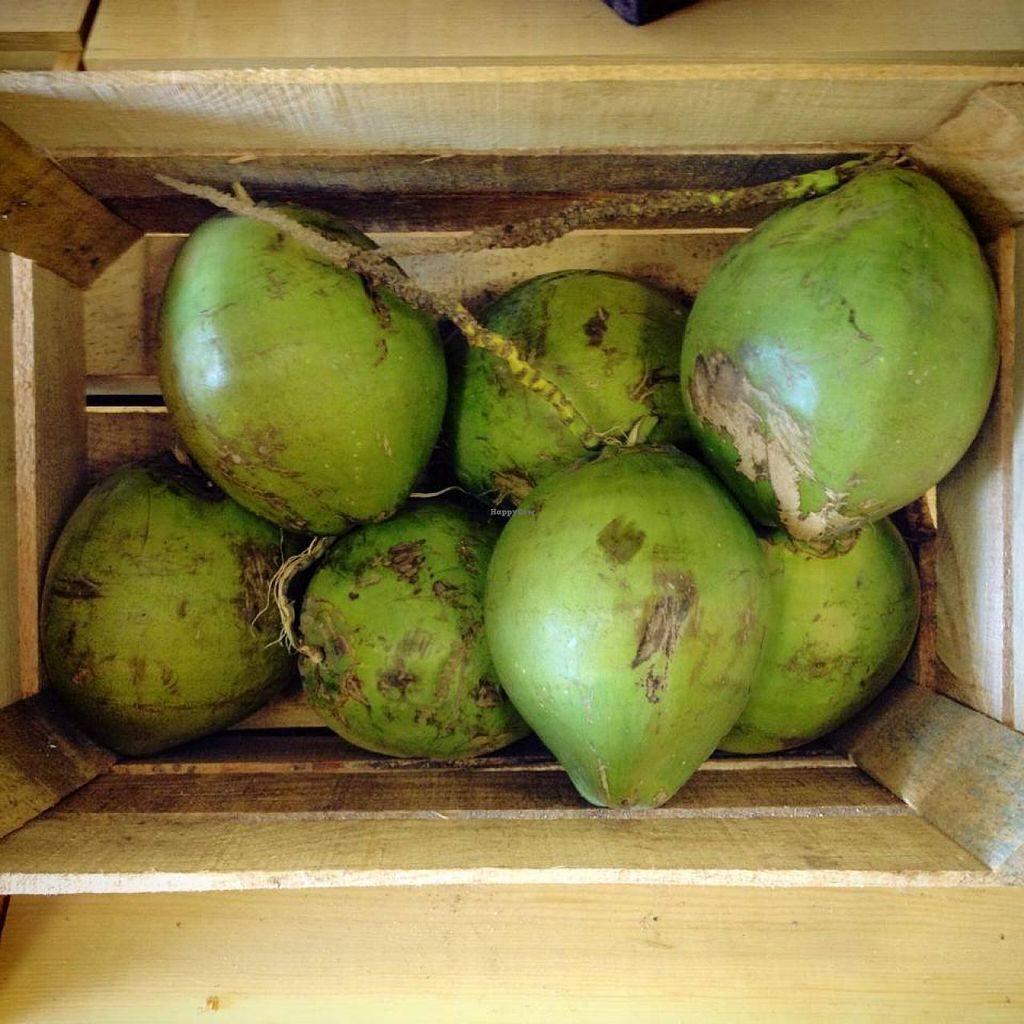 """Photo of CLOSED: Green Goddess Feel Good Market  by <a href=""""/members/profile/JoannaCoonFoxT"""">JoannaCoonFoxT</a> <br/>fresh local coconuts <br/> April 5, 2014  - <a href='/contact/abuse/image/46341/67083'>Report</a>"""