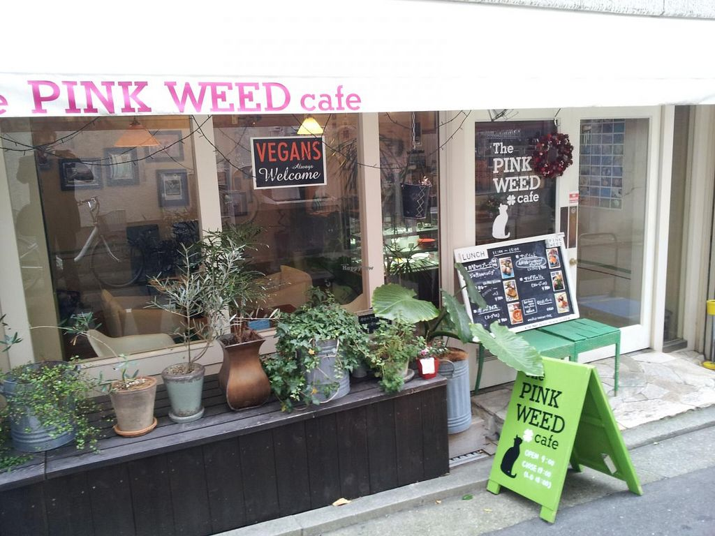 "Photo of CLOSED: The PINK WEED Cafe  by <a href=""/members/profile/necius"">necius</a> <br/>Shopfront of The PINK WEED Cafe <br/> January 17, 2015  - <a href='/contact/abuse/image/46363/90580'>Report</a>"