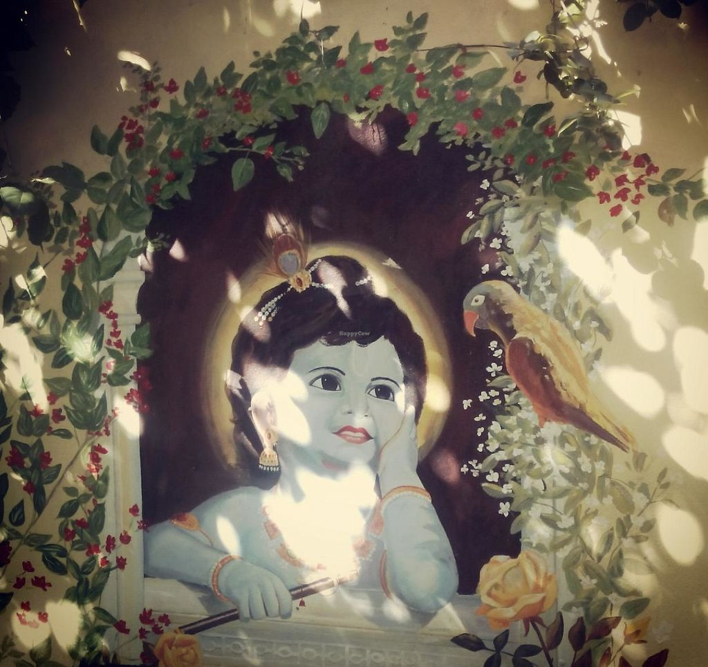 """Photo of Hare Krishna  by <a href=""""/members/profile/Misscoriander"""">Misscoriander</a> <br/>garden <br/> October 1, 2014  - <a href='/contact/abuse/image/46605/241148'>Report</a>"""