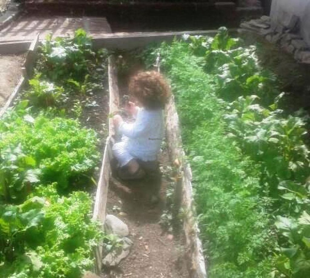 """Photo of CLOSED: Caminito Cafe  by <a href=""""/members/profile/chaba"""">chaba</a> <br/>Clean harvest fresh vegetables from our garden <br/> October 22, 2014  - <a href='/contact/abuse/image/47679/83641'>Report</a>"""
