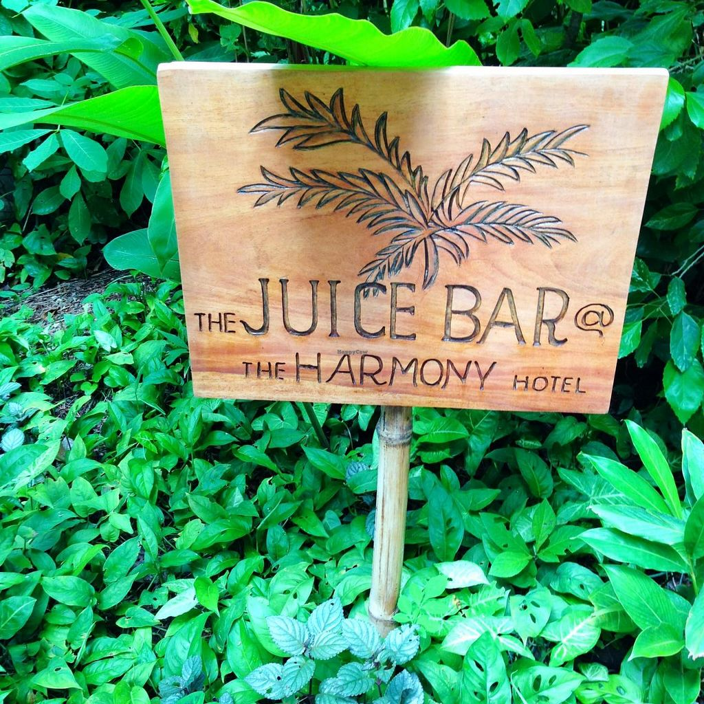 """Photo of Juice Bar at the Harmony Hotel  by <a href=""""/members/profile/Adopt%20A%20Pet"""">Adopt A Pet</a> <br/>Cafe and Juice Bar.  Part of the Harmony Hotel Healing Center <br/> June 26, 2014  - <a href='/contact/abuse/image/48364/72850'>Report</a>"""