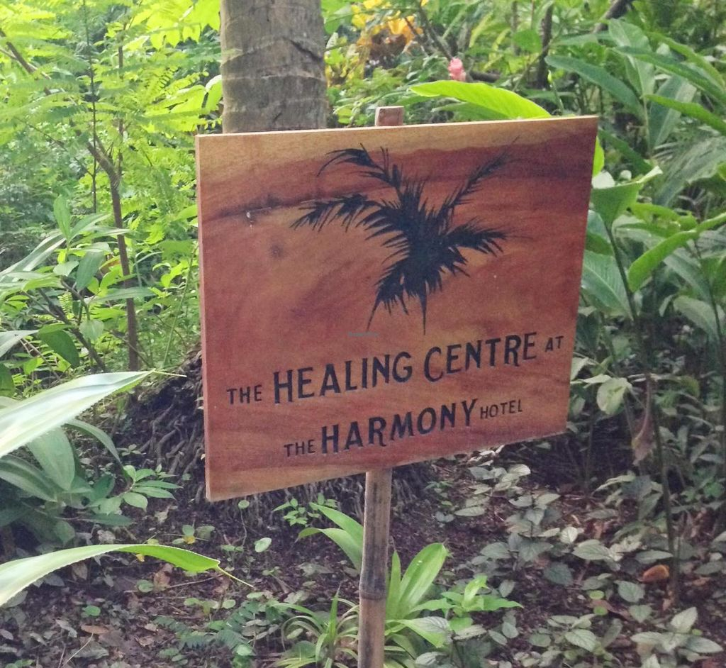 """Photo of Juice Bar at the Harmony Hotel  by <a href=""""/members/profile/Adopt%20A%20Pet"""">Adopt A Pet</a> <br/>Healing Center at the Harmony Hotel.  Yoga classes, massage, cafe, juice bar.  Hotel guests receive 2 yoga class vouchers ranging from easy stretching to advanced level.  Free surf board use also provided for hotel guests <br/> June 26, 2014  - <a href='/contact/abuse/image/48364/72851'>Report</a>"""