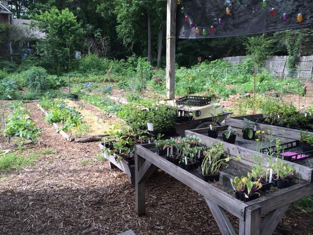 """Photo of Roots and Fruits Market  by <a href=""""/members/profile/JLP"""">JLP</a> <br/>their organic garden next to the store  <br/> July 11, 2014  - <a href='/contact/abuse/image/48534/73787'>Report</a>"""