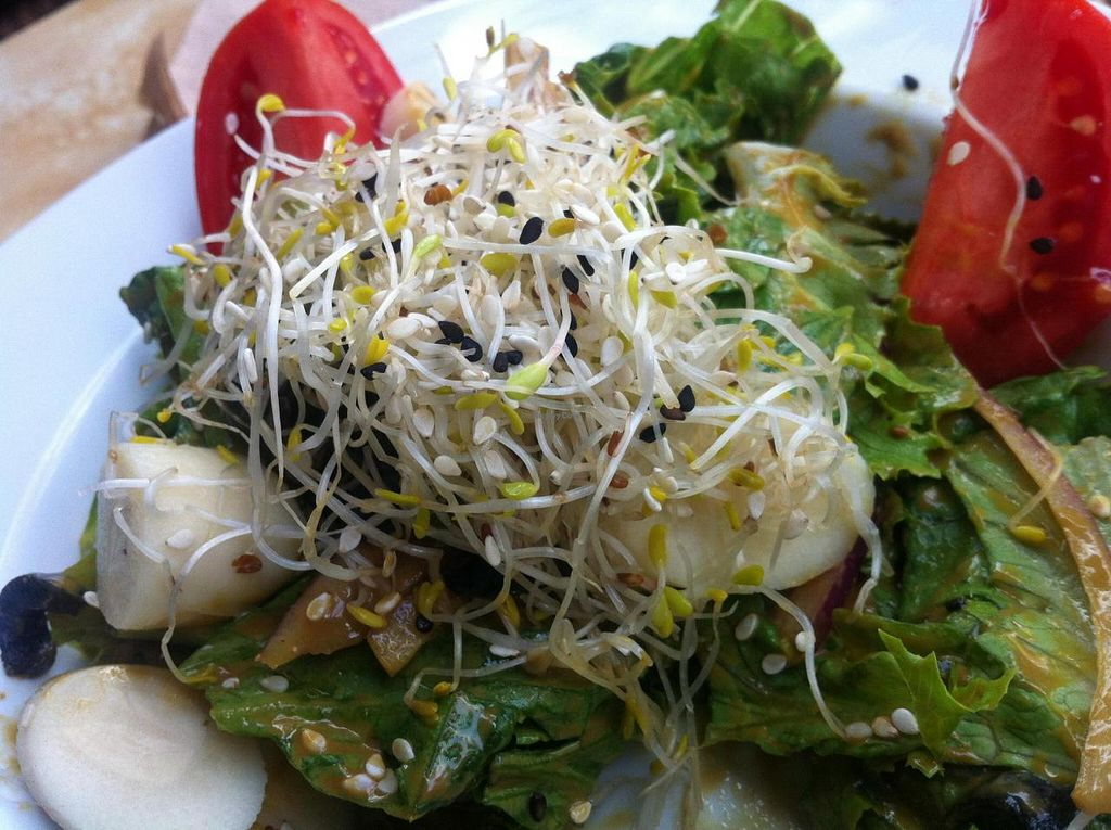 """Photo of Pan Comido Vegetariano - Darwin   by <a href=""""/members/profile/sandramv"""">sandramv</a> <br/>Madonna salad: Palmito, artichoke hearts, onion, lettuce, sesame, olives, tomato, alfalfa sprouts and house dressing  fresh and yummy <br/> July 25, 2014  - <a href='/contact/abuse/image/49219/75056'>Report</a>"""