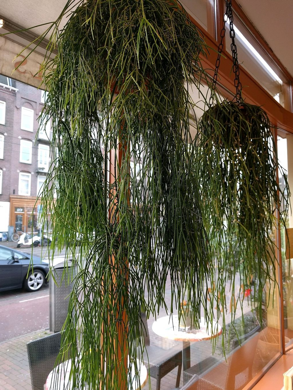 "Photo of Bagels & Beans - Waterlooplein  by <a href=""/members/profile/Jessica_Marie"">Jessica_Marie</a> <br/>cool plants <br/> October 20, 2017  - <a href='/contact/abuse/image/49261/316843'>Report</a>"
