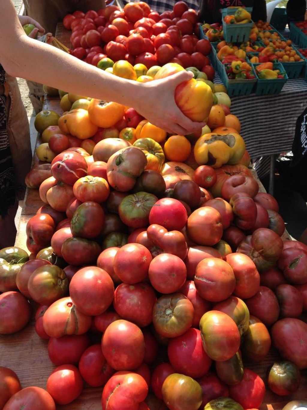 """Photo of Durham Farmers' Market  by <a href=""""/members/profile/community"""">community</a> <br/>Durham Farmers' Market <br/> July 31, 2014  - <a href='/contact/abuse/image/49415/75706'>Report</a>"""