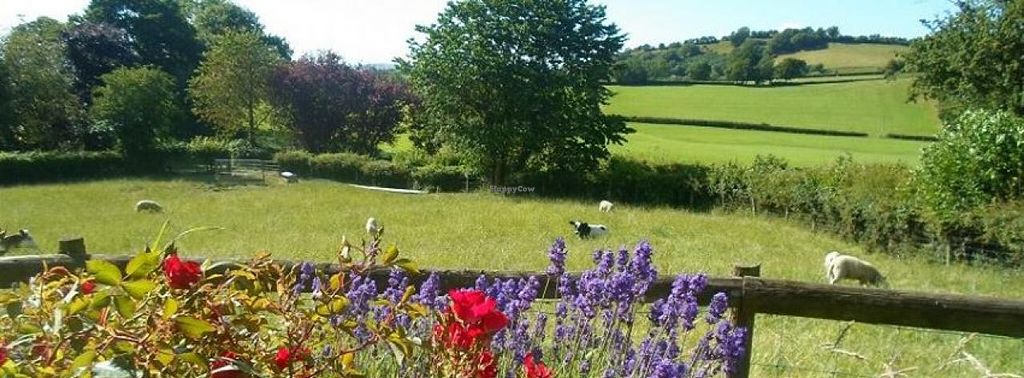 """Photo of Little Pentre Organic Eco Retreats  by <a href=""""/members/profile/community"""">community</a> <br/>Little Pentre Organic Eco Retreats <br/> September 16, 2014  - <a href='/contact/abuse/image/50320/80116'>Report</a>"""