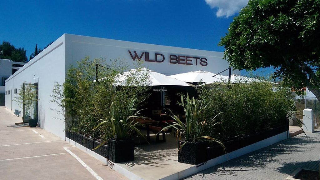 """Photo of Wild Beets  by <a href=""""/members/profile/wildbeets"""">wildbeets</a> <br/>front <br/> August 21, 2014  - <a href='/contact/abuse/image/50355/77703'>Report</a>"""