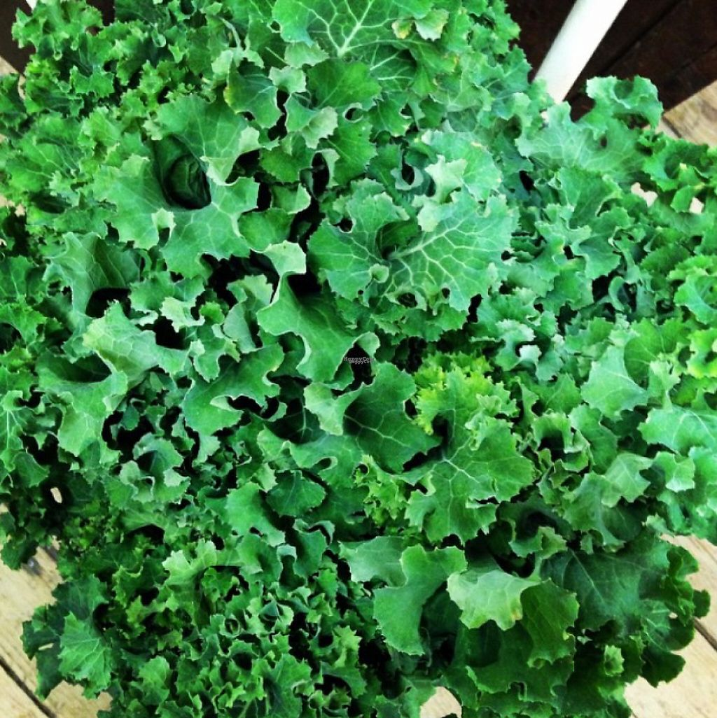 """Photo of CLOSED: Pie in the Sky  by <a href=""""/members/profile/outcastjack"""">outcastjack</a> <br/>Kale, fresh from the garden <br/> January 8, 2017  - <a href='/contact/abuse/image/50618/209583'>Report</a>"""