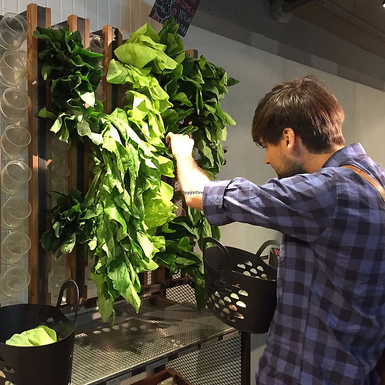 """Photo of Vege Creek - Eslite DunNan  by <a href=""""/members/profile/HaileyPoLa"""">HaileyPoLa</a> <br/>Picking fresh veggies from the wall  <br/> June 14, 2017  - <a href='/contact/abuse/image/51320/269129'>Report</a>"""