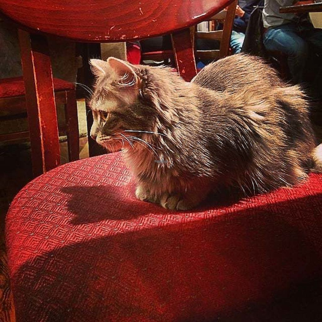 """Photo of Cafe Chat l'heureux  by <a href=""""/members/profile/mcsnv"""">mcsnv</a> <br/>Cafe Chat L'Heureux <br/> January 12, 2017  - <a href='/contact/abuse/image/51846/211401'>Report</a>"""