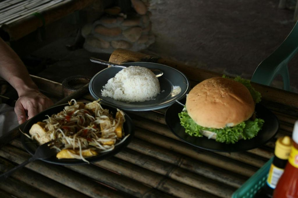 """Photo of Peace Paradise Restaurant  by <a href=""""/members/profile/Tereza-soucitne.cz"""">Tereza-soucitne.cz</a> <br/>Tofu with sprouds and tofu burger <br/> October 4, 2014  - <a href='/contact/abuse/image/51939/82107'>Report</a>"""