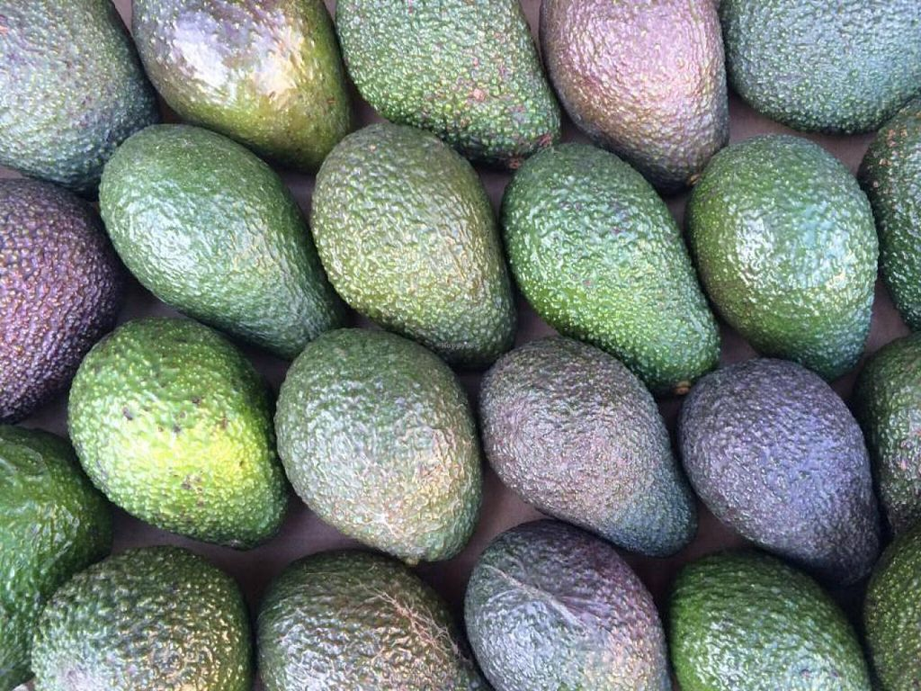 "Photo of Mourne Manor Organics  by <a href=""/members/profile/Ash26"">Ash26</a> <br/>Organic Avocadoes available in our boxes every week.  <br/> November 27, 2014  - <a href='/contact/abuse/image/53282/86616'>Report</a>"