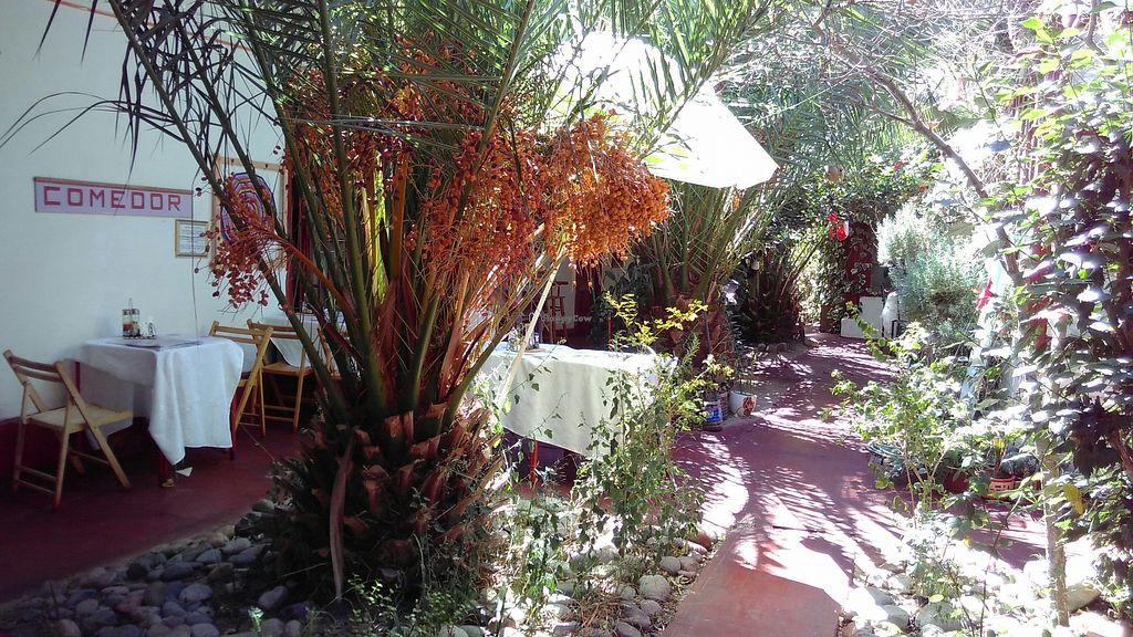 """Photo of Restaurante Paraiso del Elqui  by <a href=""""/members/profile/ajito"""">ajito</a> <br/>Patio <br/> March 18, 2018  - <a href='/contact/abuse/image/53693/372593'>Report</a>"""