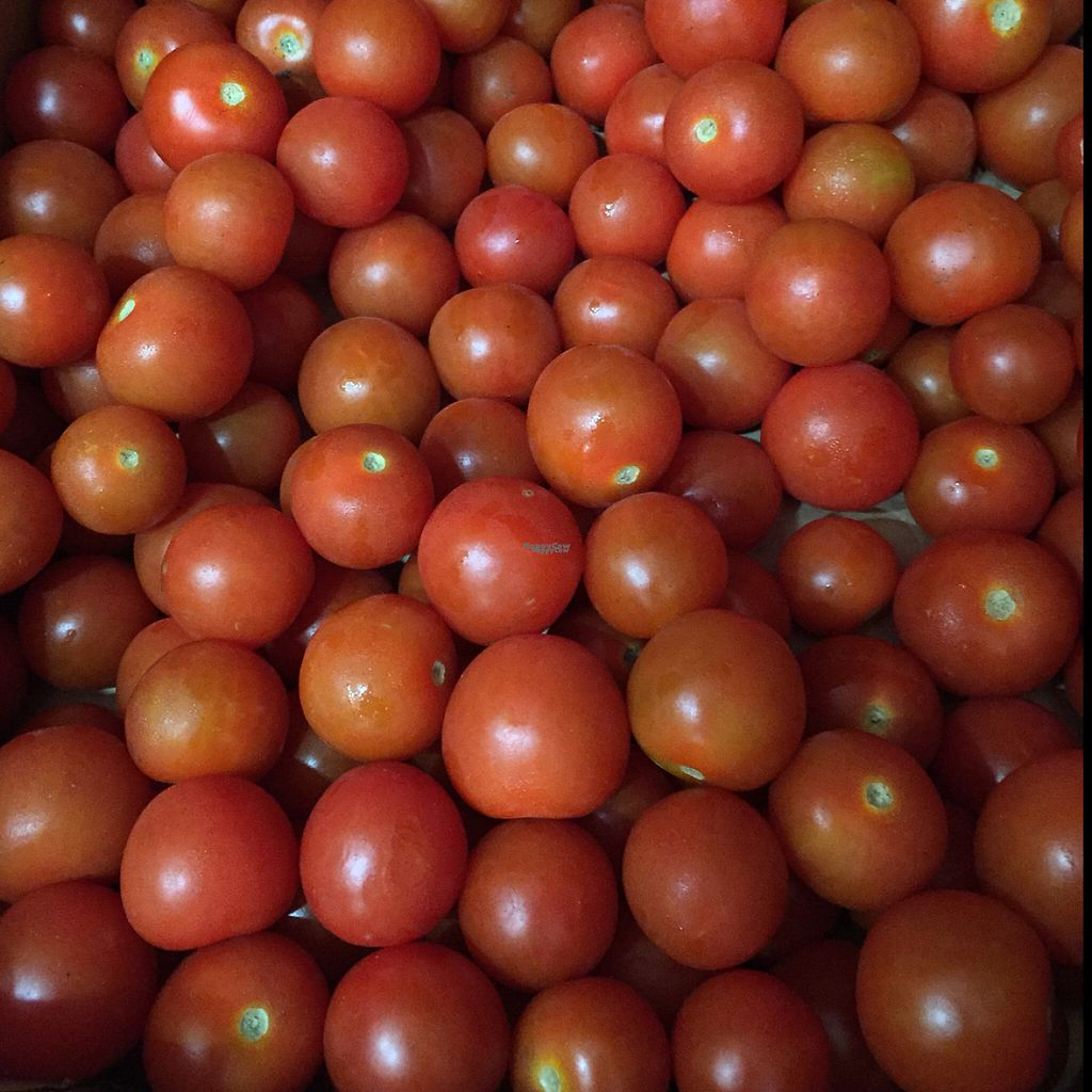 """Photo of CLOSED: Etenoha  by <a href=""""/members/profile/MyVeganJoy"""">MyVeganJoy</a> <br/>organic cherry tomatoes :) <br/> December 6, 2016  - <a href='/contact/abuse/image/53856/197741'>Report</a>"""
