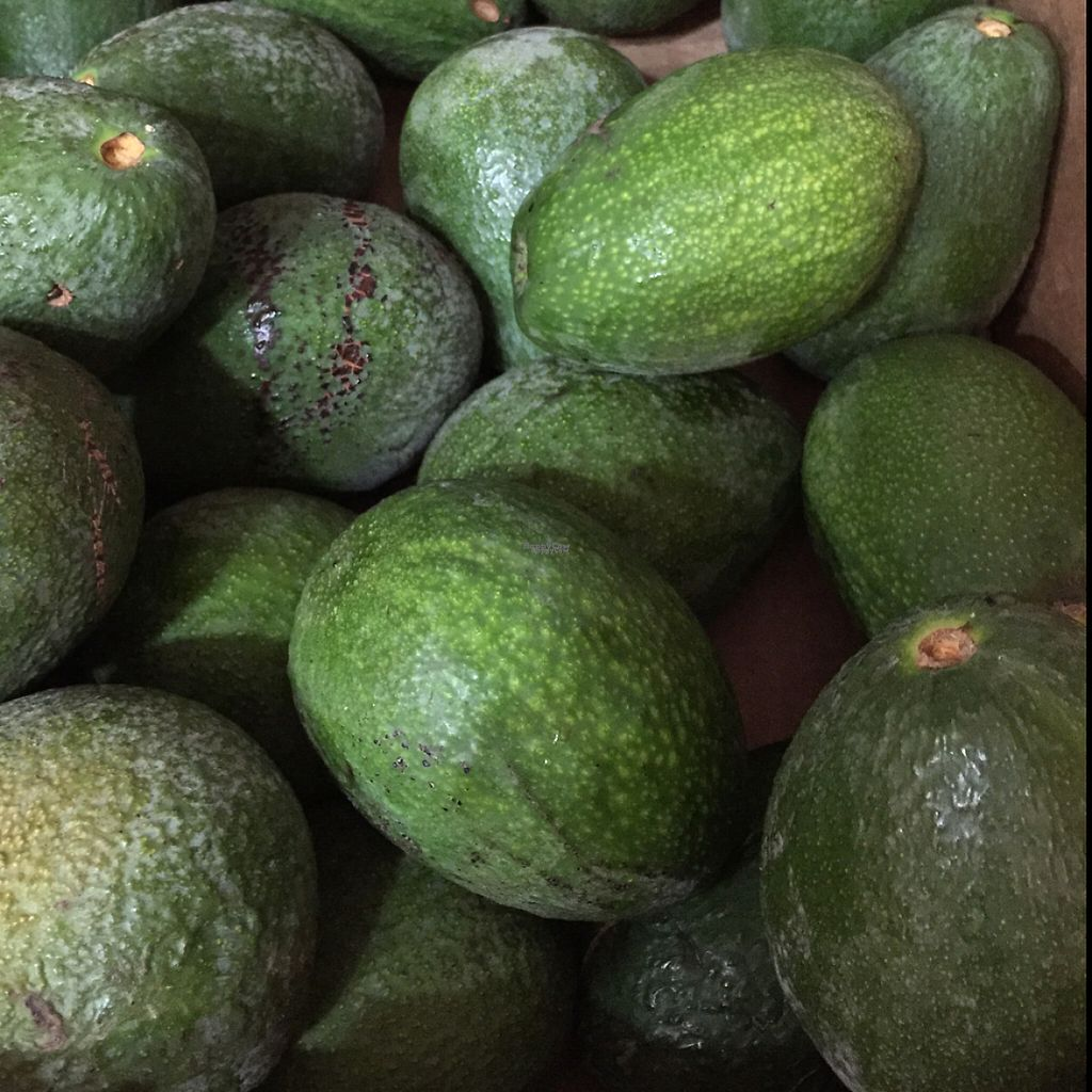 """Photo of CLOSED: Etenoha  by <a href=""""/members/profile/MyVeganJoy"""">MyVeganJoy</a> <br/>excellent local avocados <br/> December 6, 2016  - <a href='/contact/abuse/image/53856/197743'>Report</a>"""