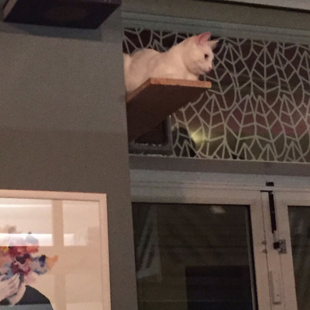"""Photo of Romeow Cat Bistrot  by <a href=""""/members/profile/ToastedAlmond"""">ToastedAlmond</a> <br/>cat watching over the restaurant  <br/> July 21, 2016  - <a href='/contact/abuse/image/54321/161361'>Report</a>"""