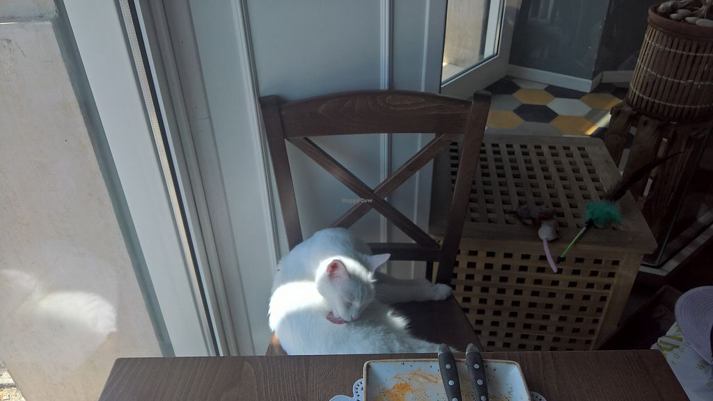 """Photo of Romeow Cat Bistrot  by <a href=""""/members/profile/VeganCannibal"""">VeganCannibal</a> <br/>The cats are bit timid but if you leave your seat this happens! :-D <br/> July 31, 2017  - <a href='/contact/abuse/image/54321/286984'>Report</a>"""