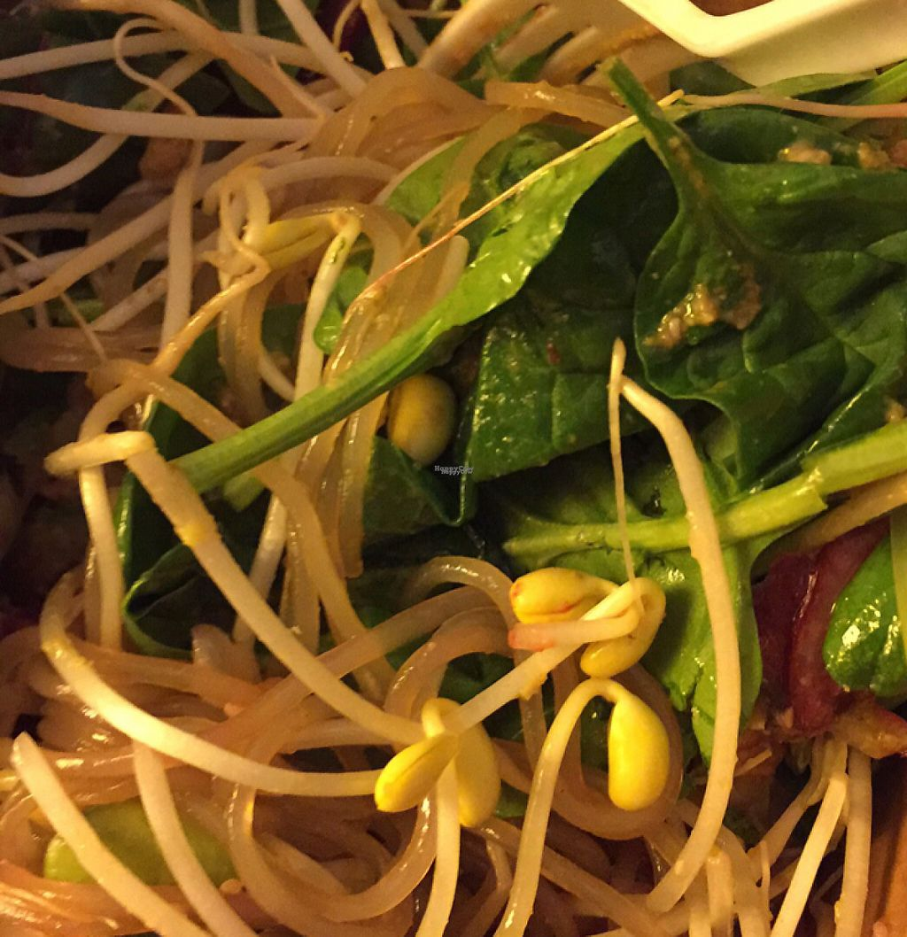 """Photo of Veghed  by <a href=""""/members/profile/ScottElswick"""">ScottElswick</a> <br/>noodle salad  <br/> February 7, 2017  - <a href='/contact/abuse/image/55006/223987'>Report</a>"""