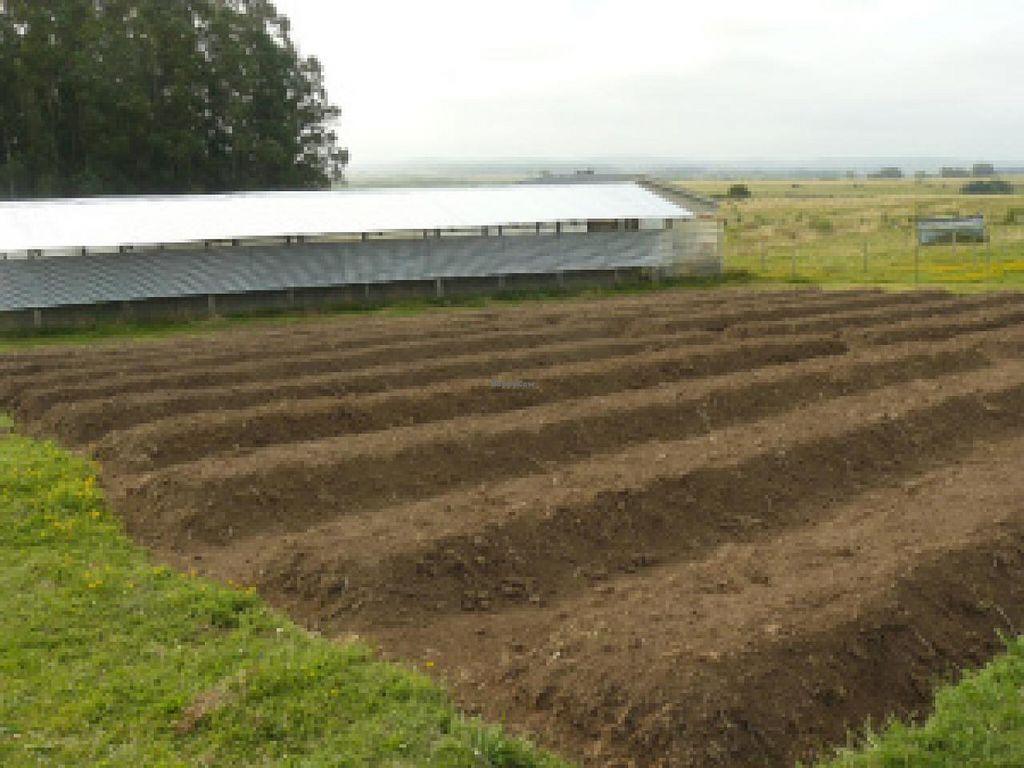 "Photo of La Piccolina Organic Farm  by <a href=""/members/profile/cuckooworld"">cuckooworld</a> <br/>Garden <br/> February 19, 2015  - <a href='/contact/abuse/image/55781/93500'>Report</a>"