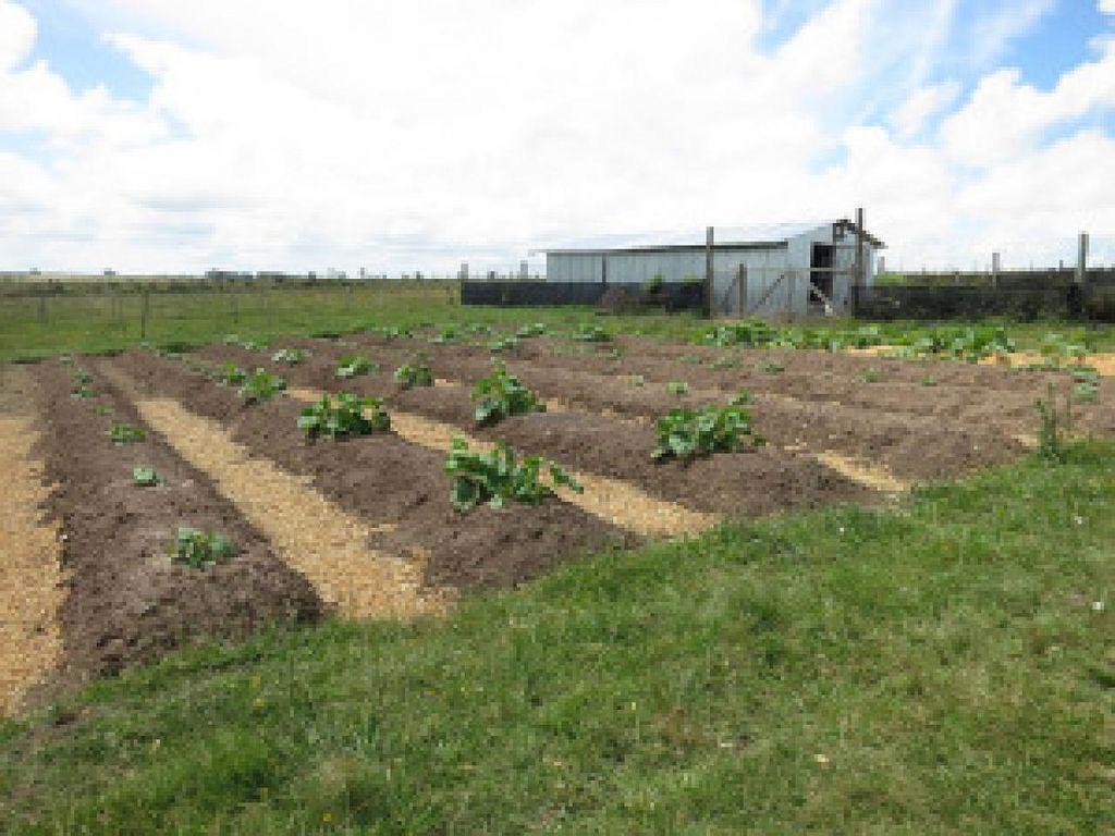 "Photo of La Piccolina Organic Farm  by <a href=""/members/profile/cuckooworld"">cuckooworld</a> <br/>Squash field <br/> February 19, 2015  - <a href='/contact/abuse/image/55781/93503'>Report</a>"
