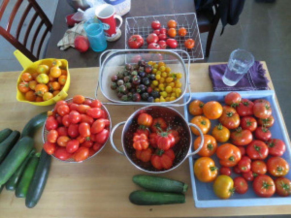 "Photo of La Piccolina Organic Farm  by <a href=""/members/profile/cuckooworld"">cuckooworld</a> <br/>Tomatoes <br/> February 19, 2015  - <a href='/contact/abuse/image/55781/93504'>Report</a>"