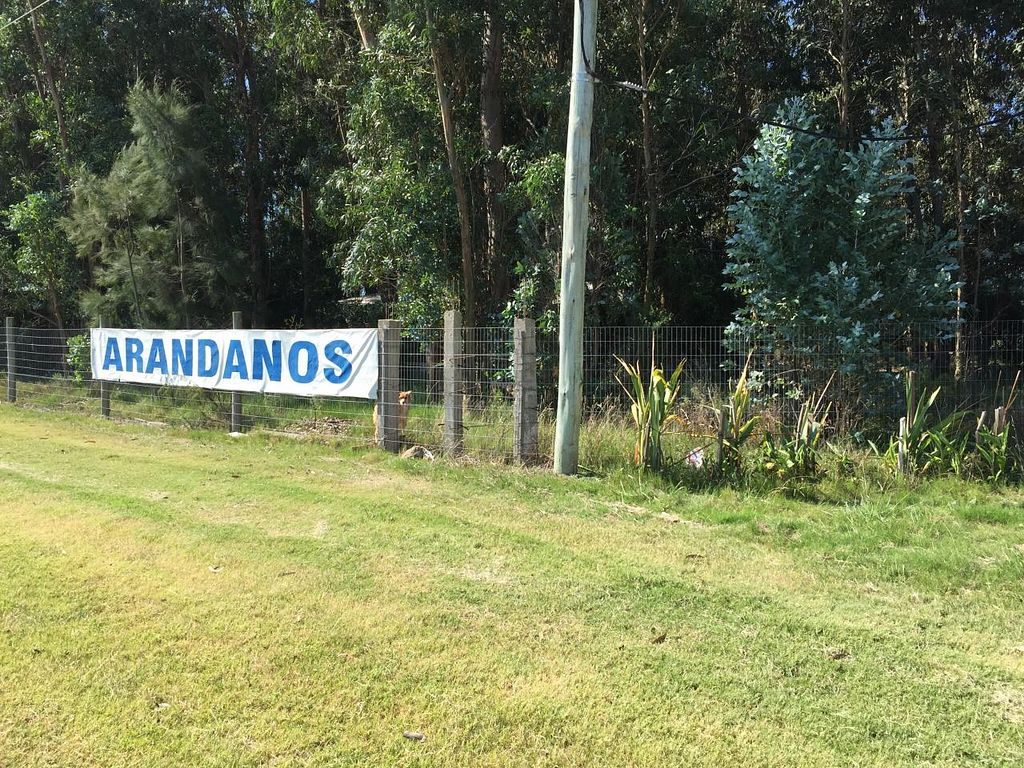 "Photo of Arandanos  by <a href=""/members/profile/cuckooworld"">cuckooworld</a> <br/>Blueberries in Spanis <br/> March 3, 2015  - <a href='/contact/abuse/image/56149/94736'>Report</a>"