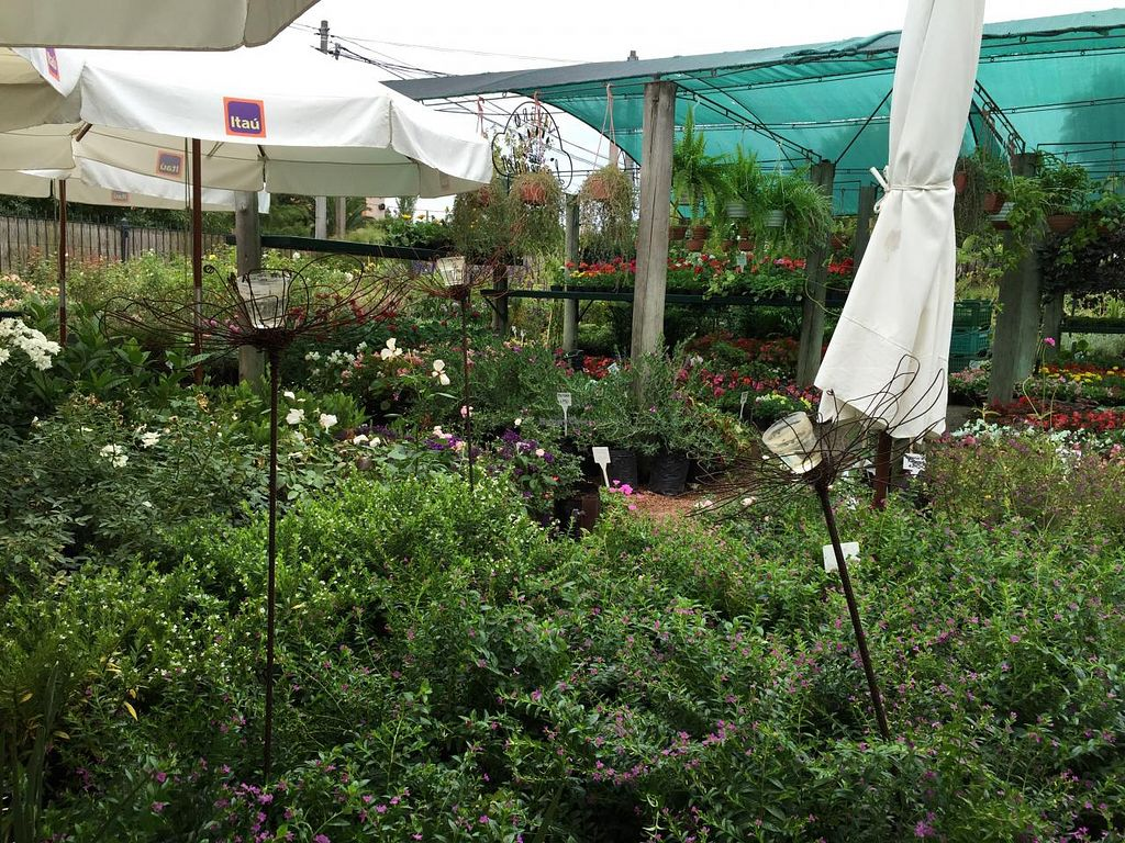"""Photo of Lavender Tea Room  by <a href=""""/members/profile/cuckooworld"""">cuckooworld</a> <br/>Garden  <br/> March 3, 2015  - <a href='/contact/abuse/image/56180/94739'>Report</a>"""