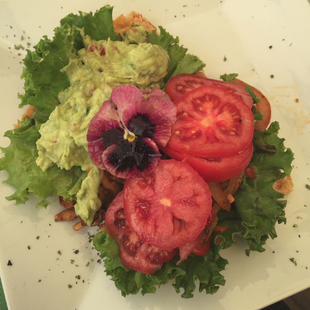 """Photo of CLOSED: The Green Patio  by <a href=""""/members/profile/sunniezuleta"""">sunniezuleta</a> <br/>avocado toast <br/> October 28, 2015  - <a href='/contact/abuse/image/56856/123004'>Report</a>"""